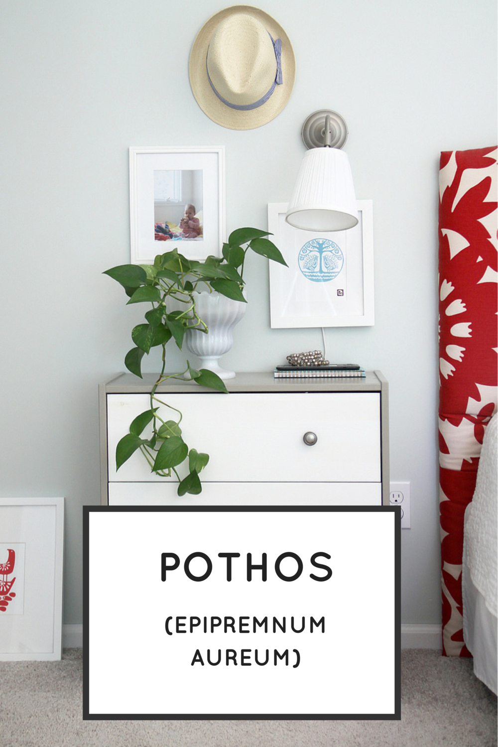 Easy Houseplants: Pothos