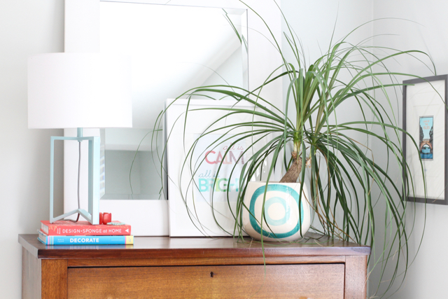 Indoor Plants on Colorful Dresser