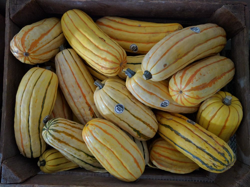 Delicata Squash from Green Field Farms (Wayne County, OH)