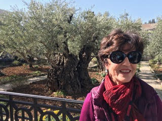 "At the Mount of Olives….""Coming out, He went to the Mount of Olives, as He was accustomed…"" Luke 22:39  These olive trees in the background have been there for 2000 years, since the time of Jesus. This was His prayer place."