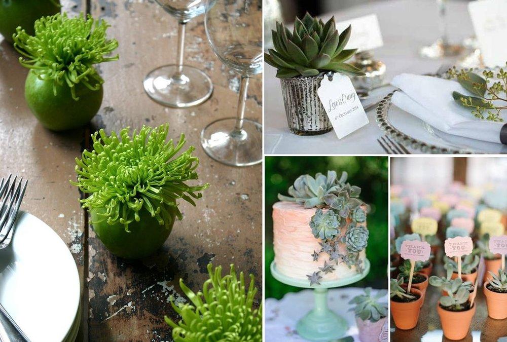 Succulents wedding inspiration | New Zealand brides | found for you by Astra Bridal and www.borrowedandblue.kiwi