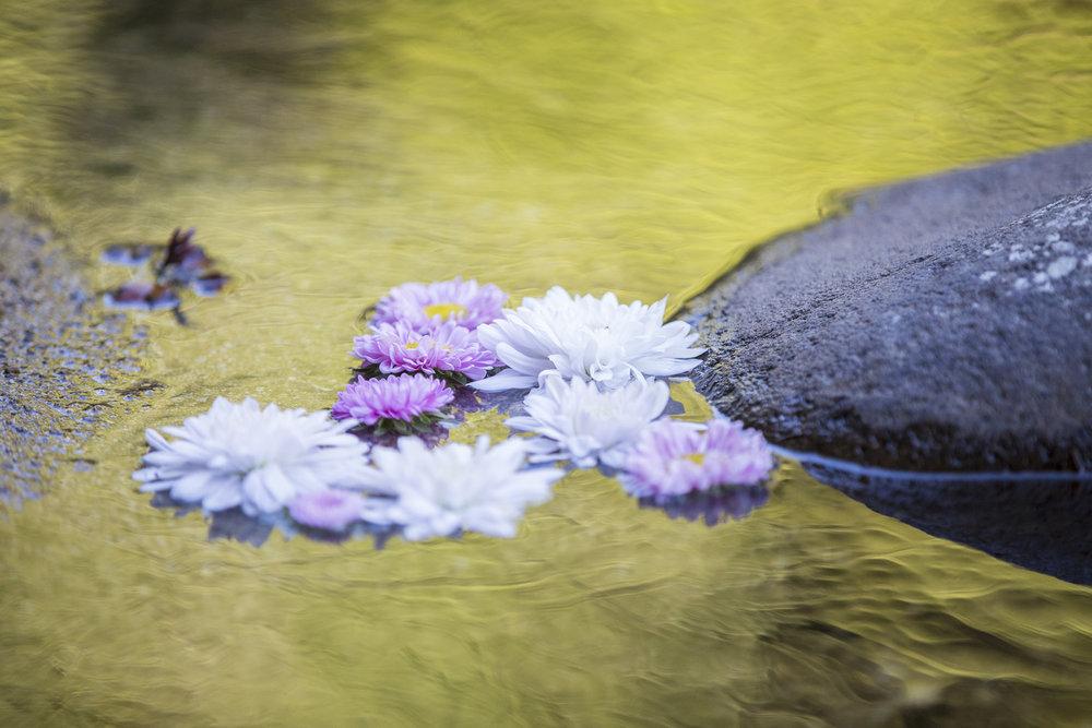 Petals Astra Bride Kylie | Christina Rossi 4246 | Kaimai Mamaku Forest | Creative Grain Photography |