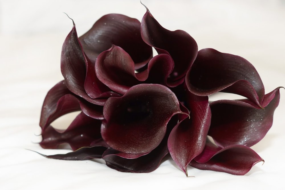 Burgundy Calla Lillies  | Astra bride Kerry | Marys 6205 | Windy Ridge, Ohaupo| Amanda Barron - heart and soul images Photography