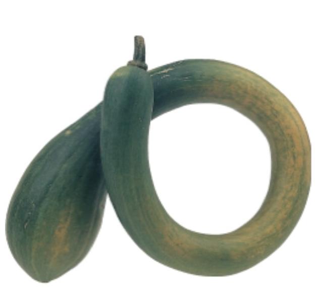 Una Cucurbita moscata : Trombetta d'Albenga . Frutto lungo fino a 150 cm che matura in 120-130 giorni e si conserva fino a 12 mesi. Da giovane si consuma come le zucchine. Ideale per lasagnette o altri piatti sfiziosi.