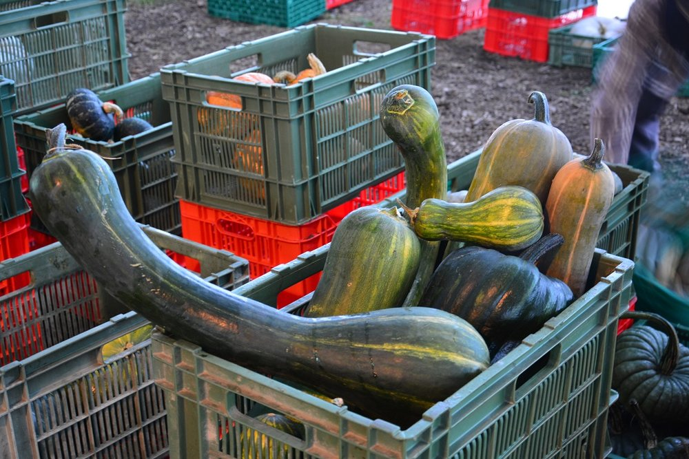 mercato delle zucche 033.JPG