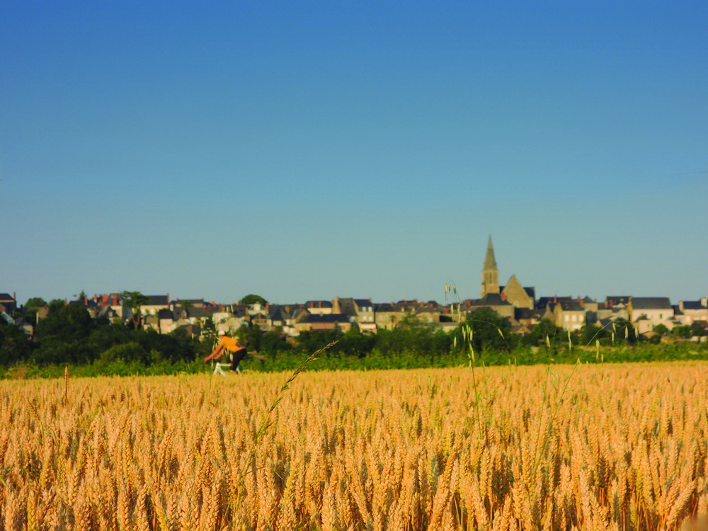 Cycling through Wheat fields, south france