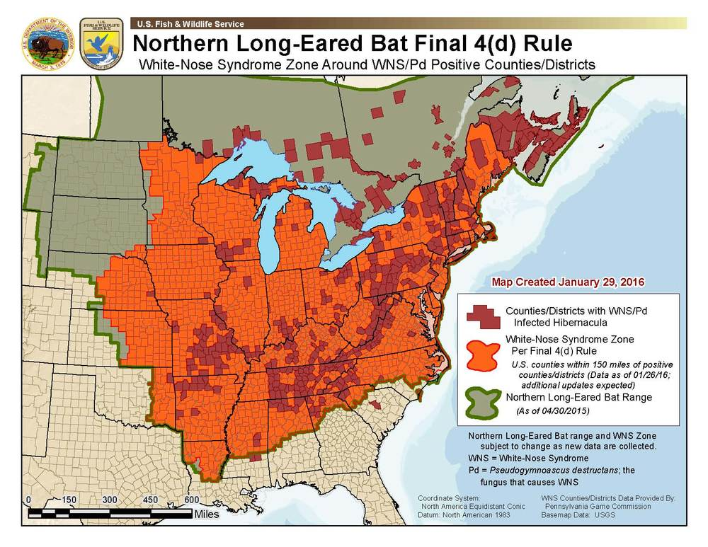 U.S. FWS Northern Long-Eared Bat County Restrictions Map ( Click on image to enlarge .)