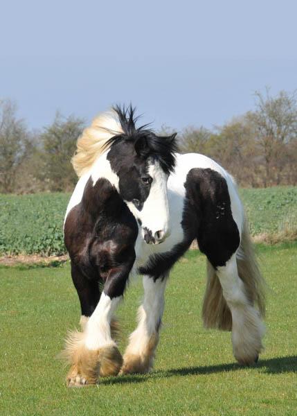 Horse 5x7.jpg