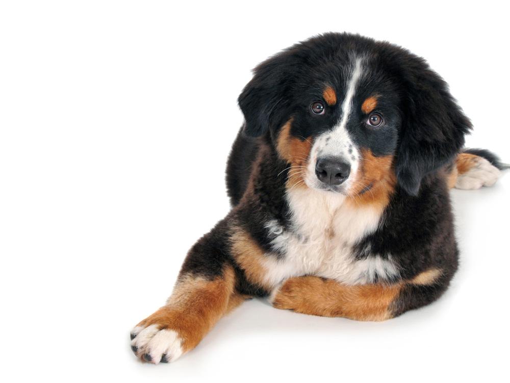Dogs_Webpage.jpg