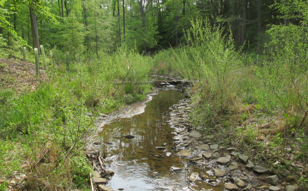WSSI's federal work includes stream restoration at Fort Belvoir (pictured), where we've also provided  Waters of the U.S.  delineation & survey location, searches for federally-threatened small whorled pogonia, and permitting assistance.