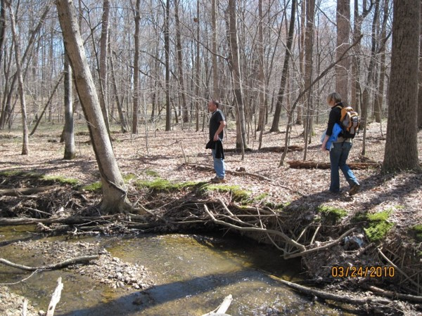 Channel widening takes a toll on trees