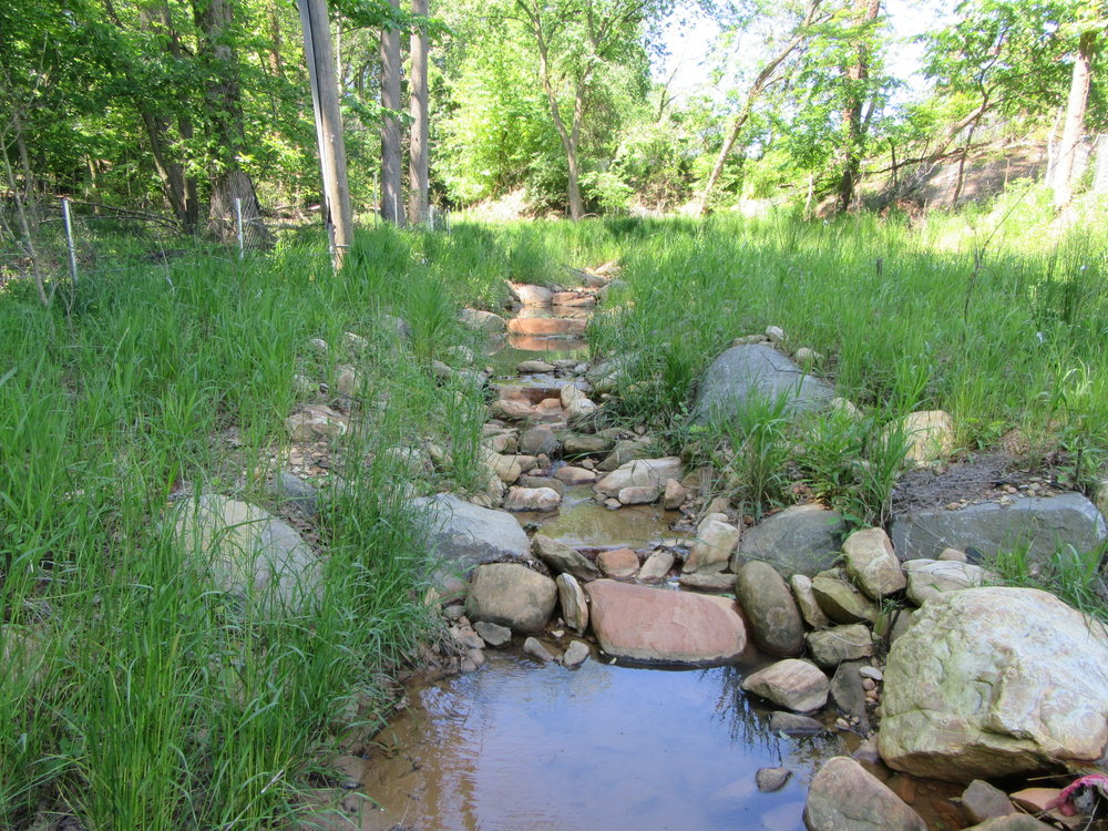 ANC  stream 1 year after restoration.