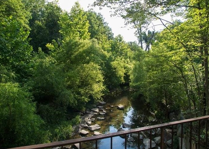 5 years after restoration construction    The stream ecosystem is healthy and the riparian vegetation is abundant and flourishing. The restored stream system is a community asset.