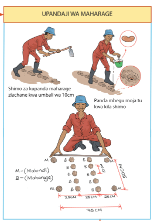 An excerpt from the GAP manual in Swahili.