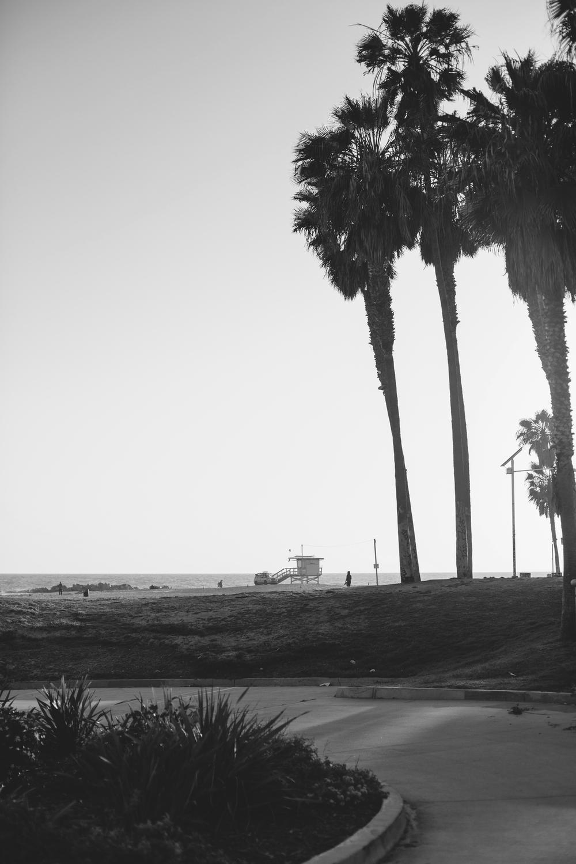 Los Angeles 310.896.5321 601 Rose #A, Venice, CA 90291