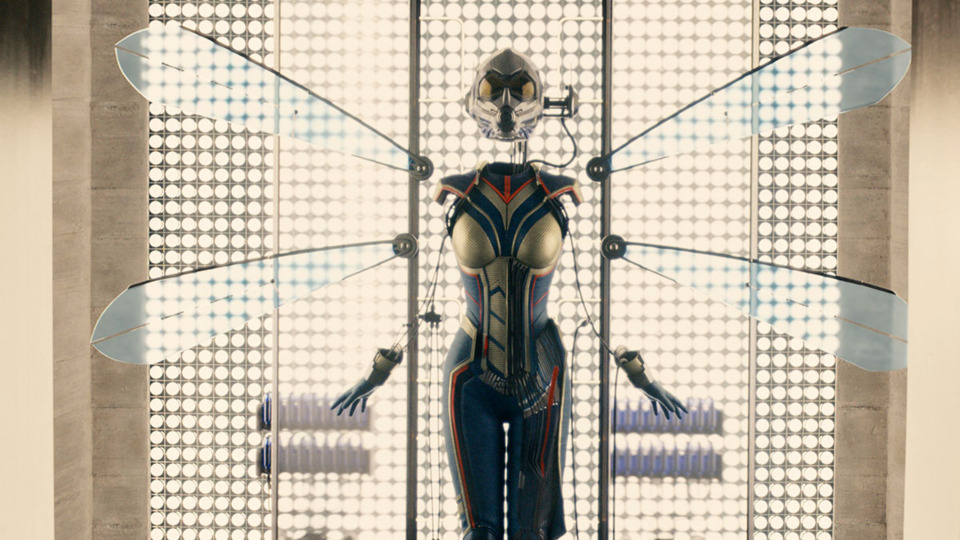 4843232-wasp-costume-pic.jpg