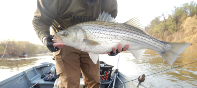 It's all about the passion, and the stripers drive us to pursue the pull.