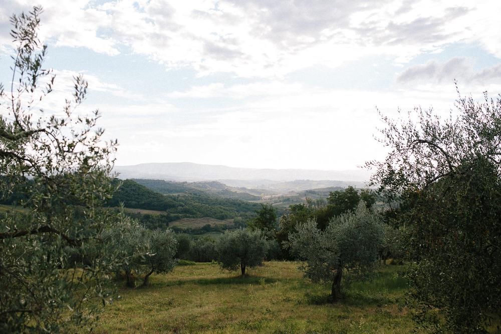 122-borgo-petrognano-olive-trees.jpg