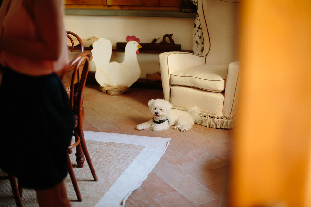 dog-stop-motion-wedding-italy.jpg