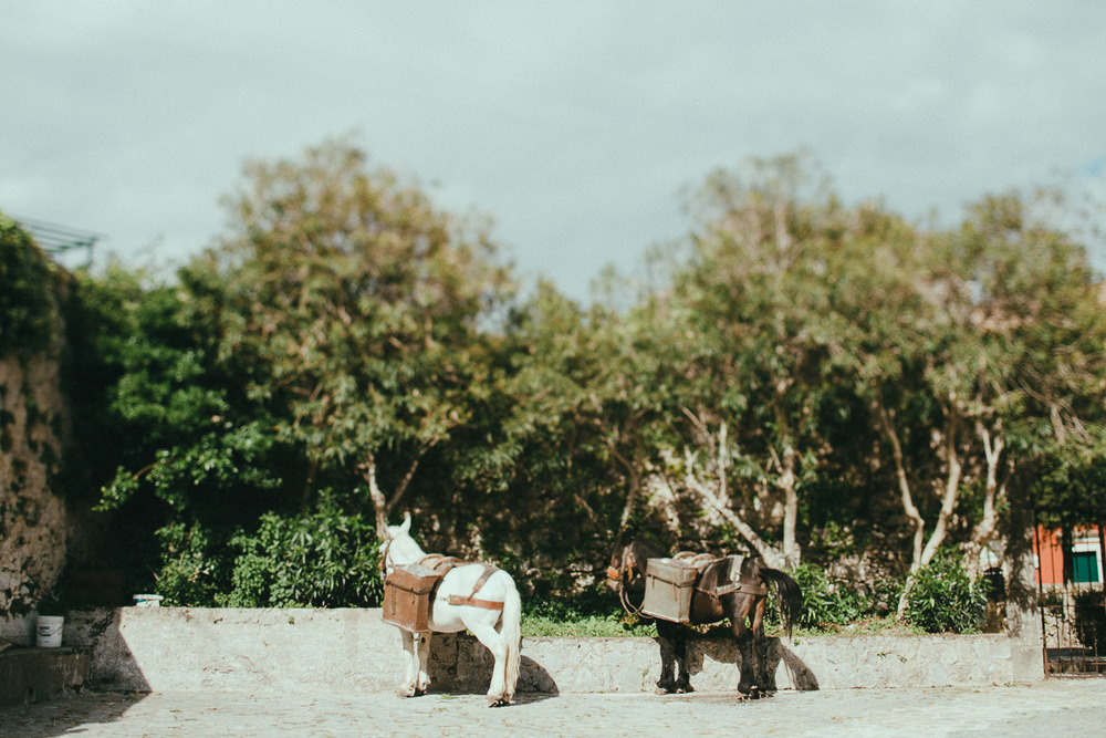 21-amalfi-coast-mules.jpg