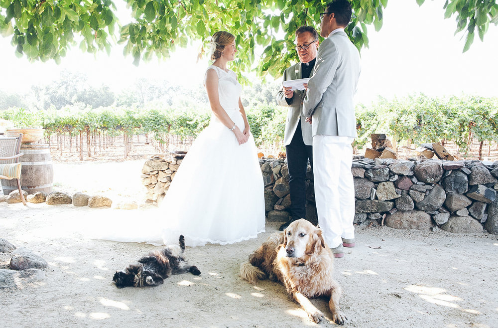 napa_winery_wedding_photography_margit_rich_ebony_siovhan_bokeh_photography_74.jpg