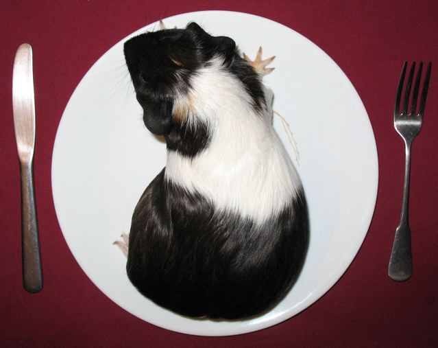 guinea on a plate