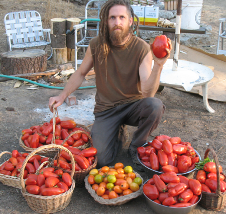 I harvested over 50 pounds from one Polish Linguisa plant in that season.  It isn't the best tasting tomato out of the lot though.  My favorite is the little yellow ones in front, Orange Banana.  They have a sweet fruity flavor.  The reds tend to have more a tomatoey flavor, which is good for some uses, so I grow both.