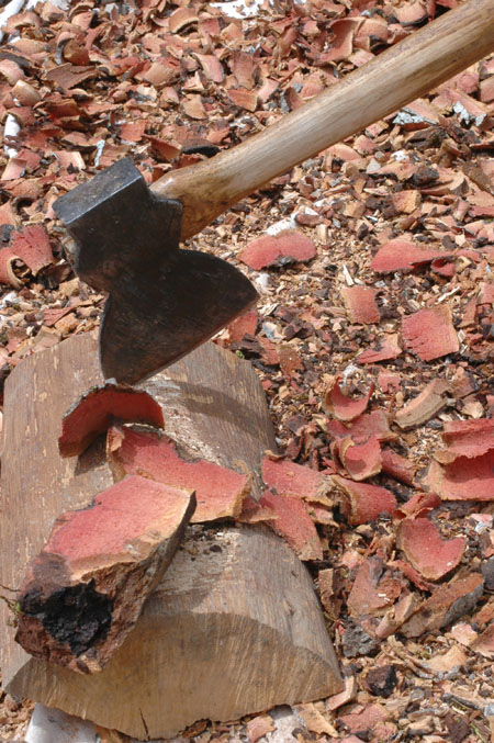Chopping bark for boiling.  After drying in the sun, the bark was further crushed and boiled to extract the tannic acid.