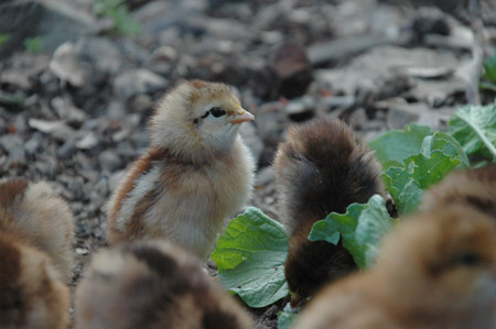 Gratuitous cute chick pic
