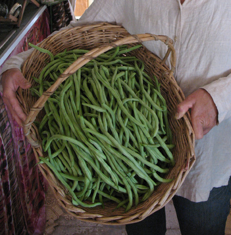 Fortex green bean rocks!