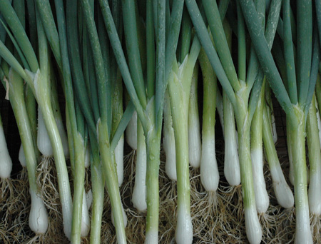 Scallions of unknown variety