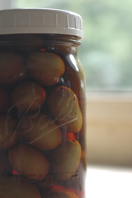 This jar of olives was about 4 years old when I opened it and took the olives to the Olive Odyssey festival.  They were very good.  This is one great advantage to fermenting and then storing in the fermenting jars.