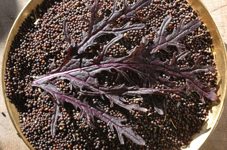Seeds of Ruby Streaks, a red Mizuna type mustard green.  This hasn't turned out to be a very good market item, but I eat quite a bit of it sauteed in butter.