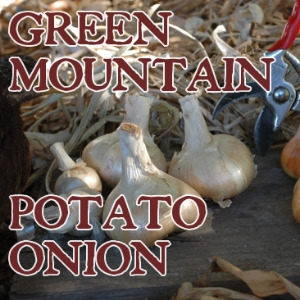 Green Mountain Multiplier Onion