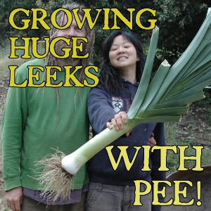 Growing huge Leeks and Onions with urine