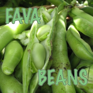 Fava beans, How I grow and eat them