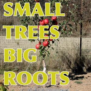 Interstem Grafting Apple Trees
