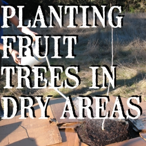 Article on planting and establishing fruit trees in Mediterranean climates