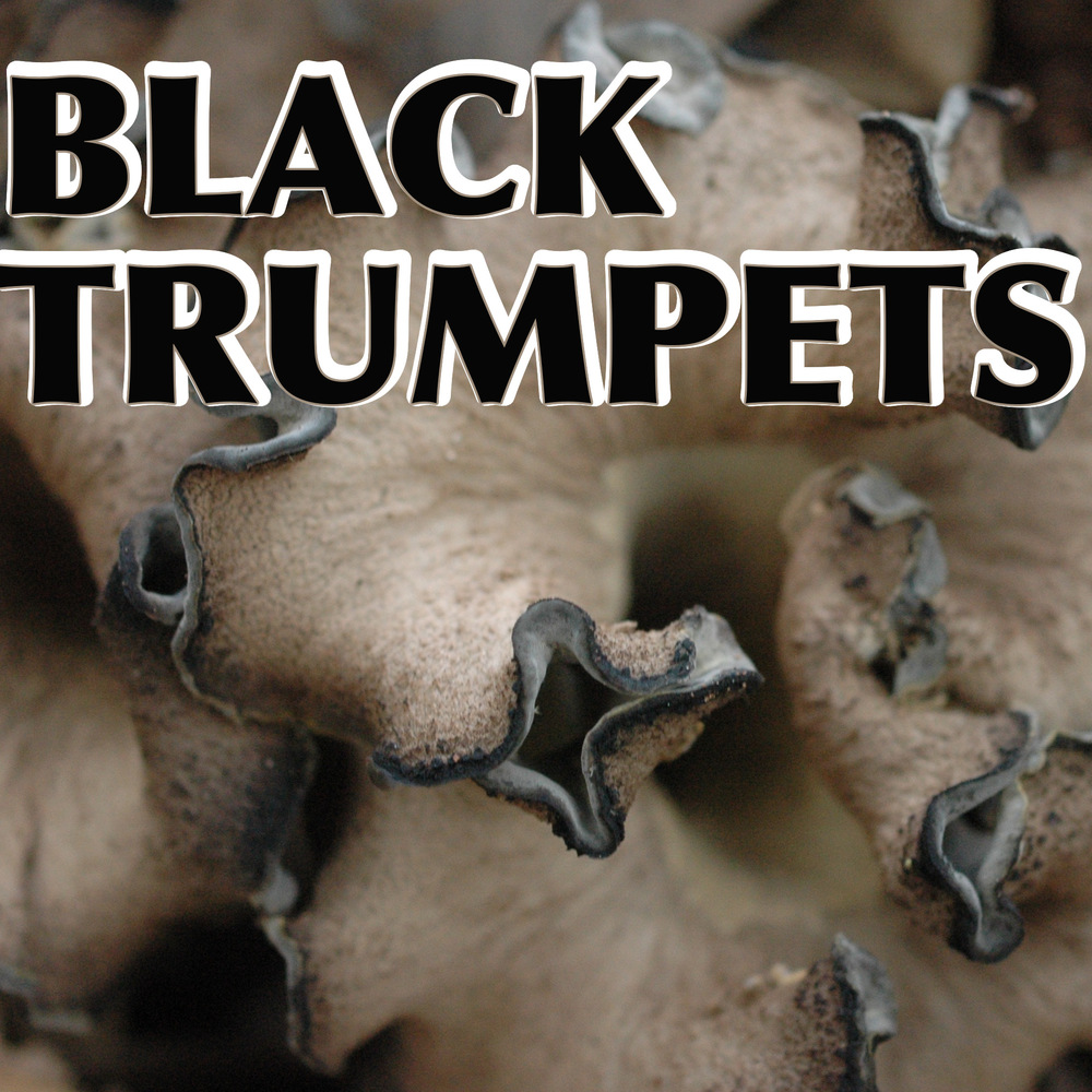 Black Trumpet Mushrooms, collecting, cleaning, drying and cooking