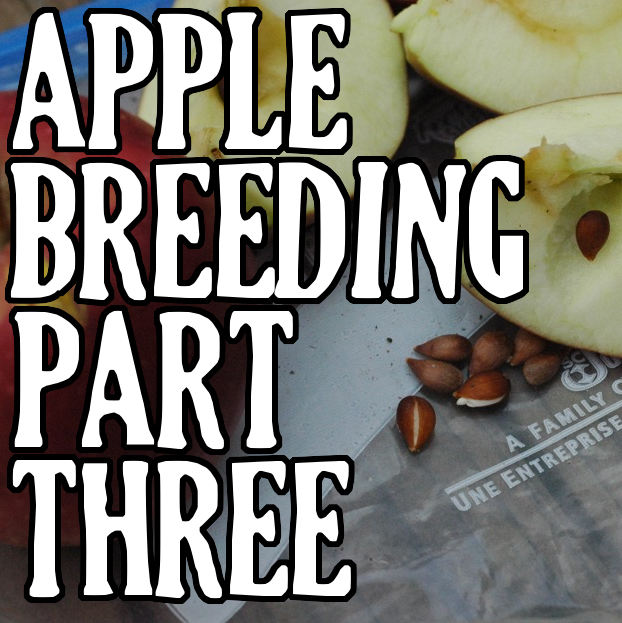 Apple Breeding Part III: Seed to Fruit