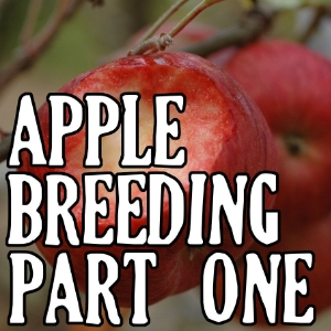 Apple Breeding Series, click here to view on plant breeding page...