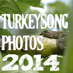 Turkeysong the year in pictures 2014