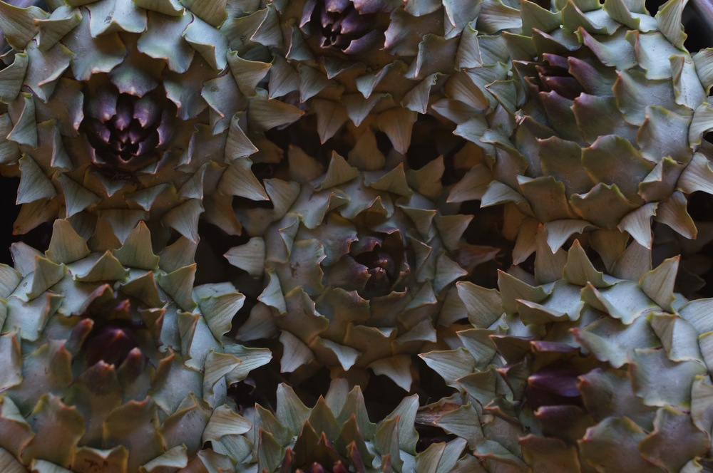 A primitive form of artichoke.  The scales are nothing to write home about, but the hearts are large and tasty.  And they look cool, though they are spiny little suckers.