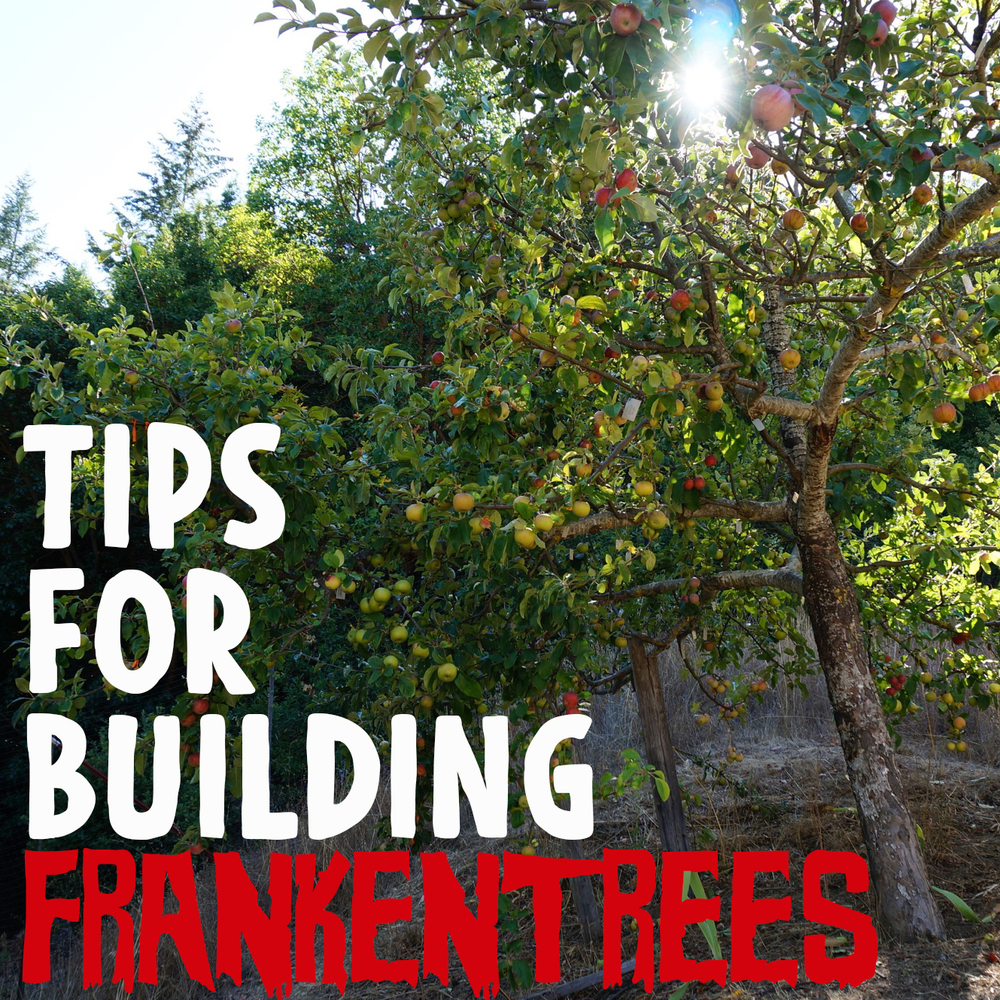 Tips for Frankentreeing  and framework grafting