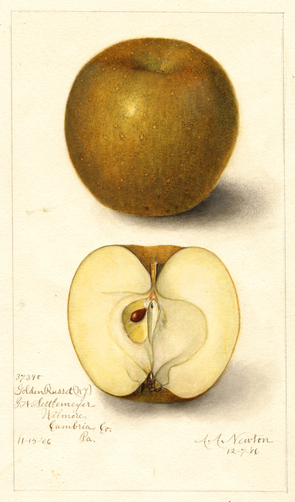The Venerable Golden Russet possesses remarkable depth of character and should be grown more.