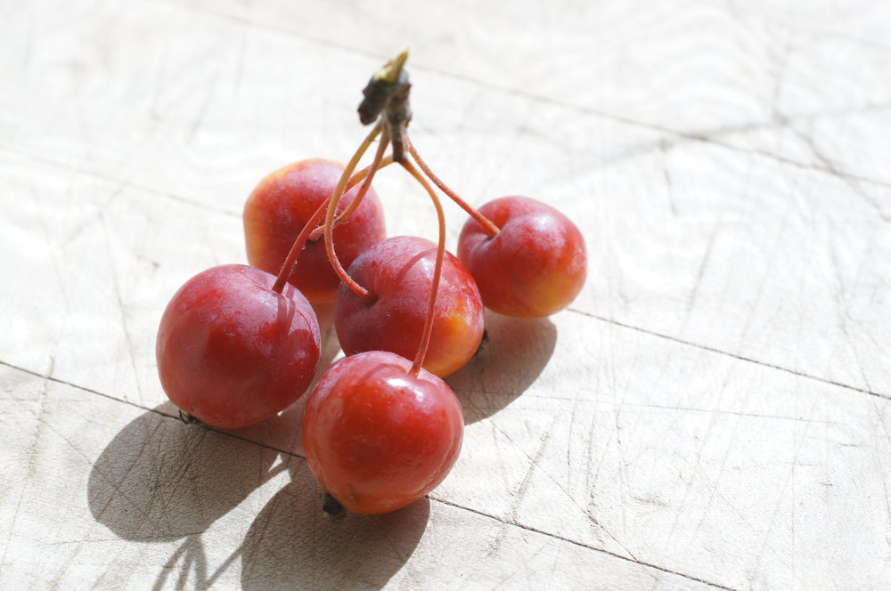"The beautiful cherry-like clusters of Becca's Crab inspired the concept of a ""cherry apple"".  I've got apples with all the characteristics I'd want in my cherry apple, but getting them all together in one variety could take many crosses and crosses of crosses and crosses of crosses of crosses, if it's possible at all."