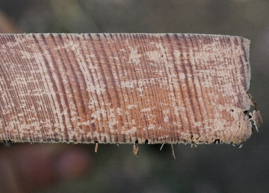 If making a beam out of lumber, choose vertical grain like this over plain sawn face grain if possible as it will be less likely to crack. This is never a choice with a round or split log.