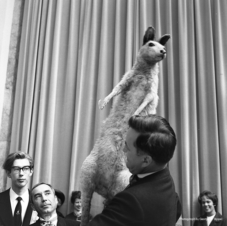 Win a Kangaroo