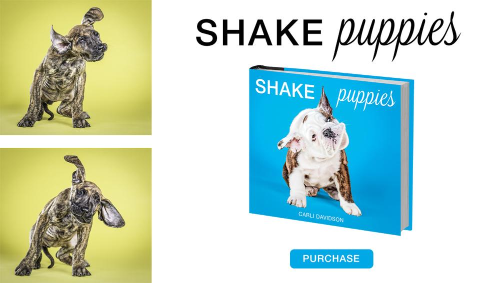 puppies slide.jpg