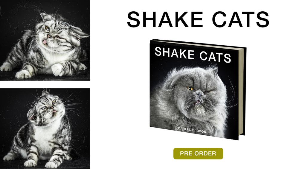 cats slide.jpg